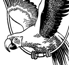 Free Black And White Parrot Image!