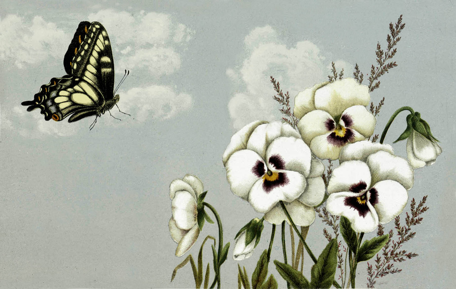 Beautiful Butterly With Pansies Image
