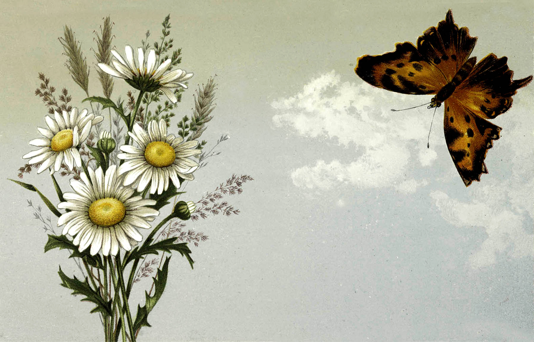 Vintage Red Butterfly With Daisy's Image