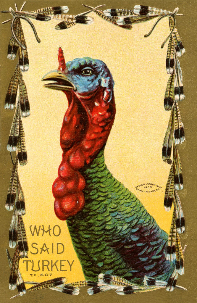 Vintage Apprehensive Turkey Image!