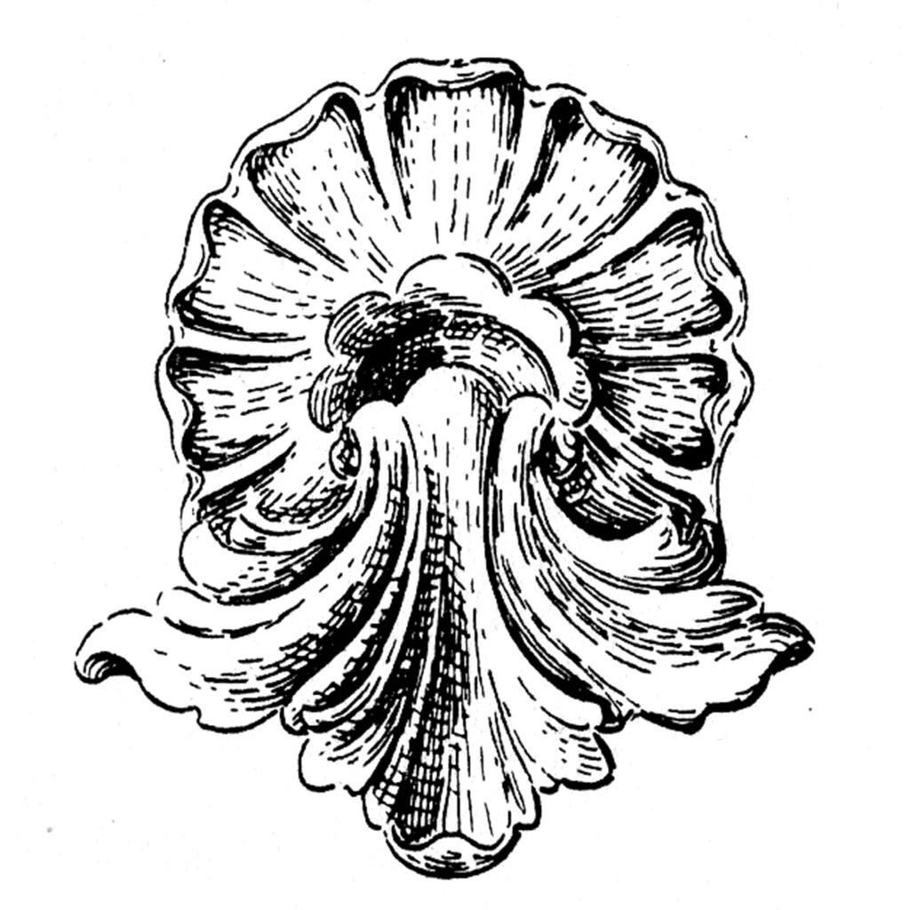 Old Shell and Acanthus Leaf Image!