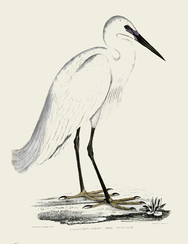 White Heron Printable GraphicsFairy
