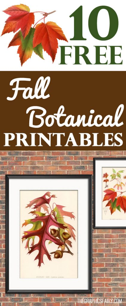 10 Free Fall Botanical Printables