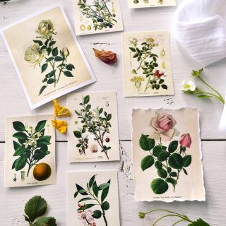 DIY Botanical Labels or Tags – Free printable!