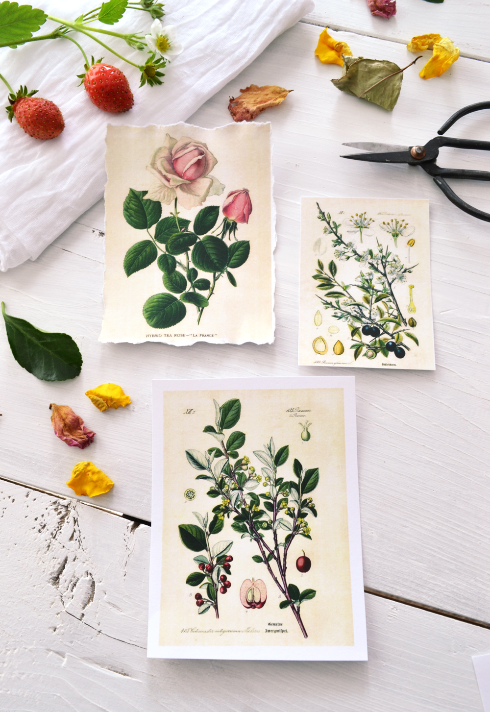 DIY Botanical Labels or Tags Free printable! - dinocro.info