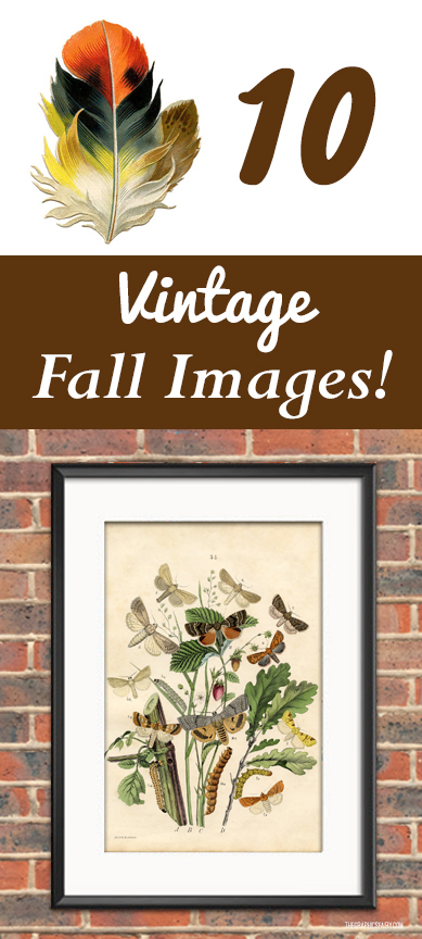 10 Free Vintage Fall Pictures and Fall Printables