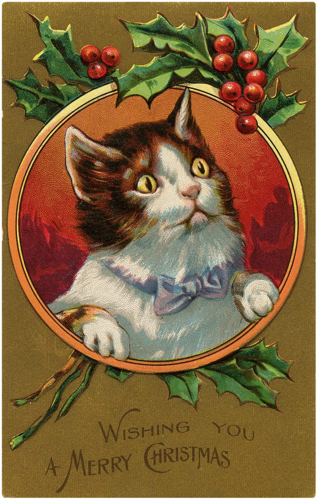 Christmas Cat with Holly Frame Image