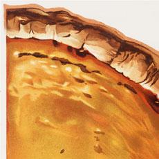 Vintage Pumpkin Pie Image!