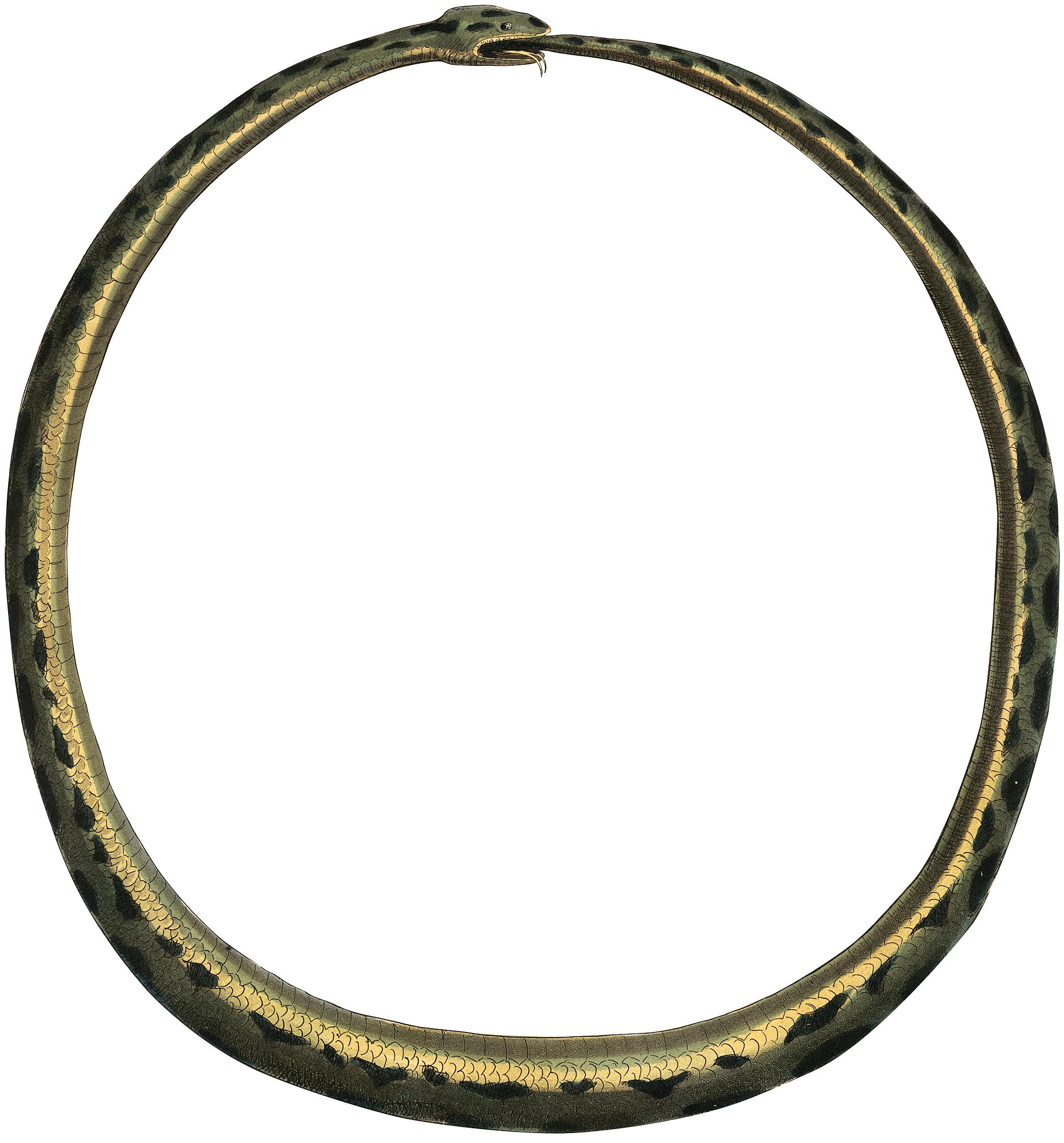Amazing Vintage Snake Frame Image