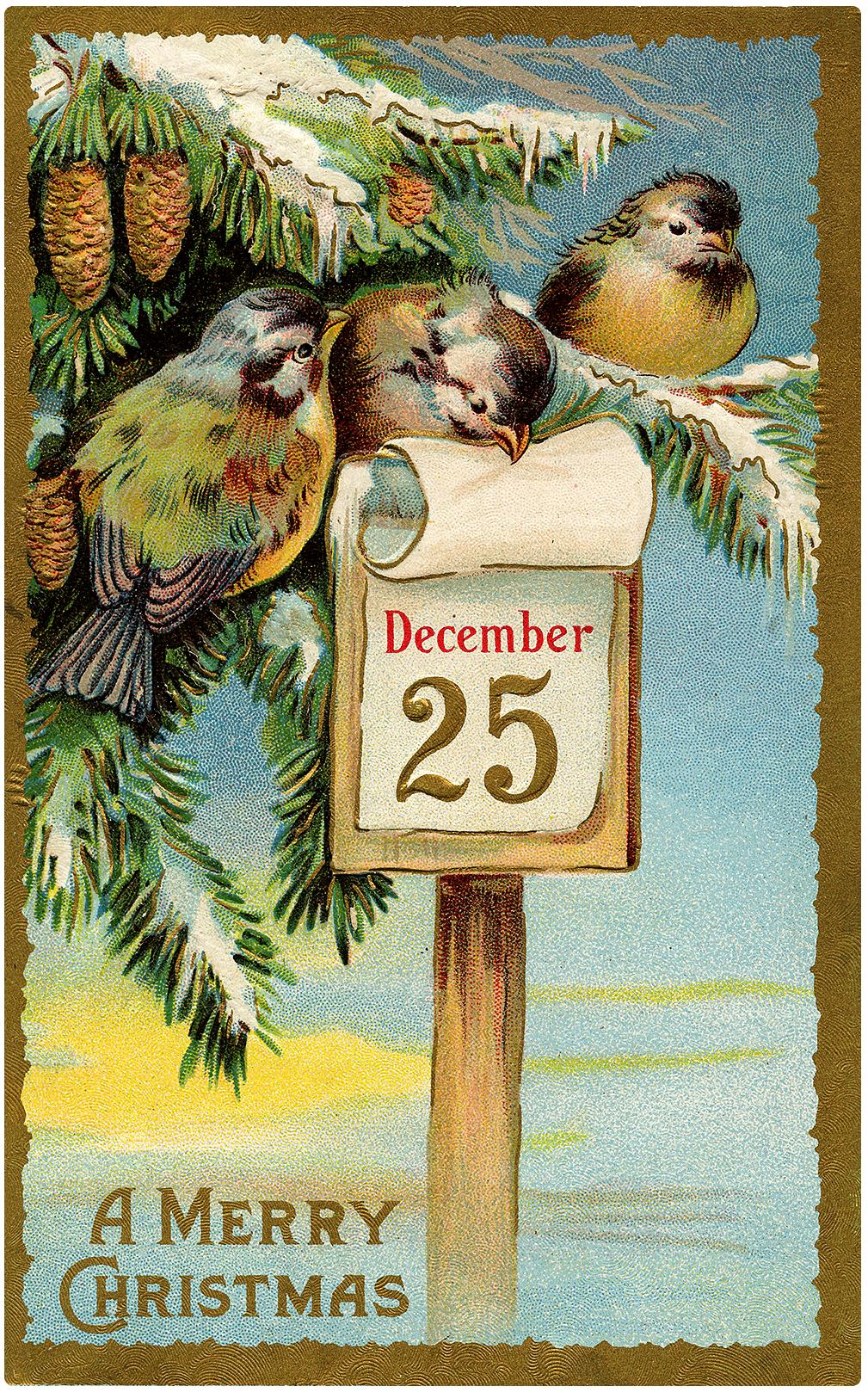 Nostalgic Little Birds with Christmas Calendar Postcard!
