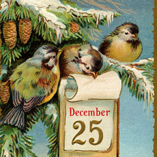 Nostalgic Little Birds with Christmas Calendar Postcard!