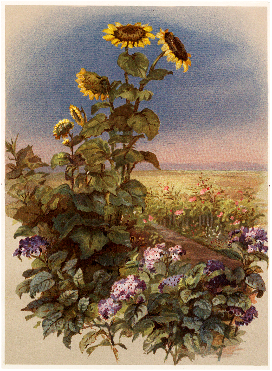 Vintage Tall Sunflowers in Garden Image - The Graphics Fairy