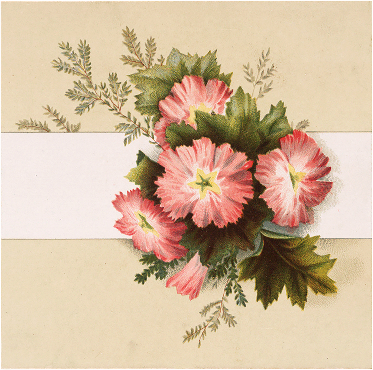 Vintage Card with Coral Flowers Image