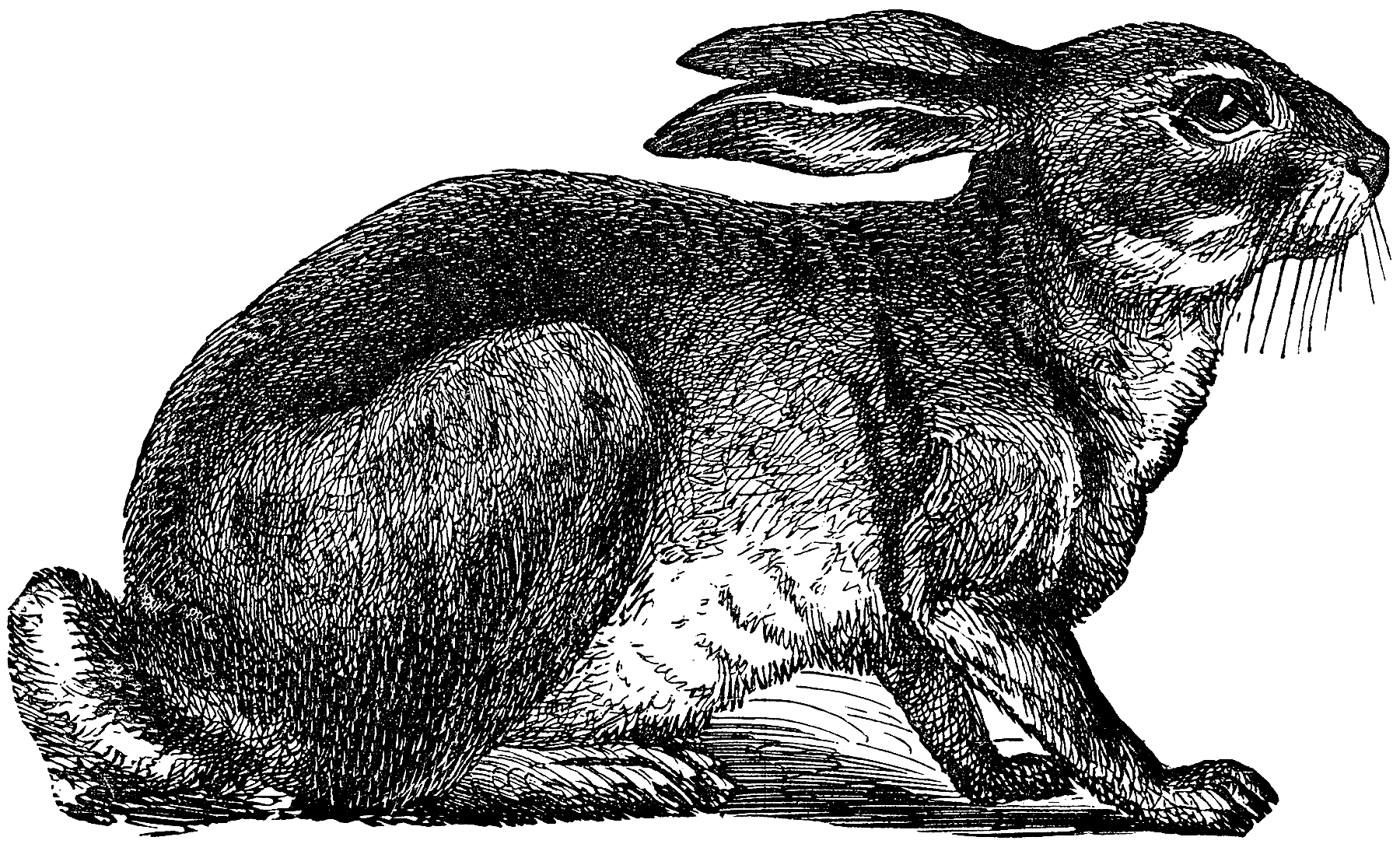 Cute Vintage Black and White Rabbit Clip Art! - The ...