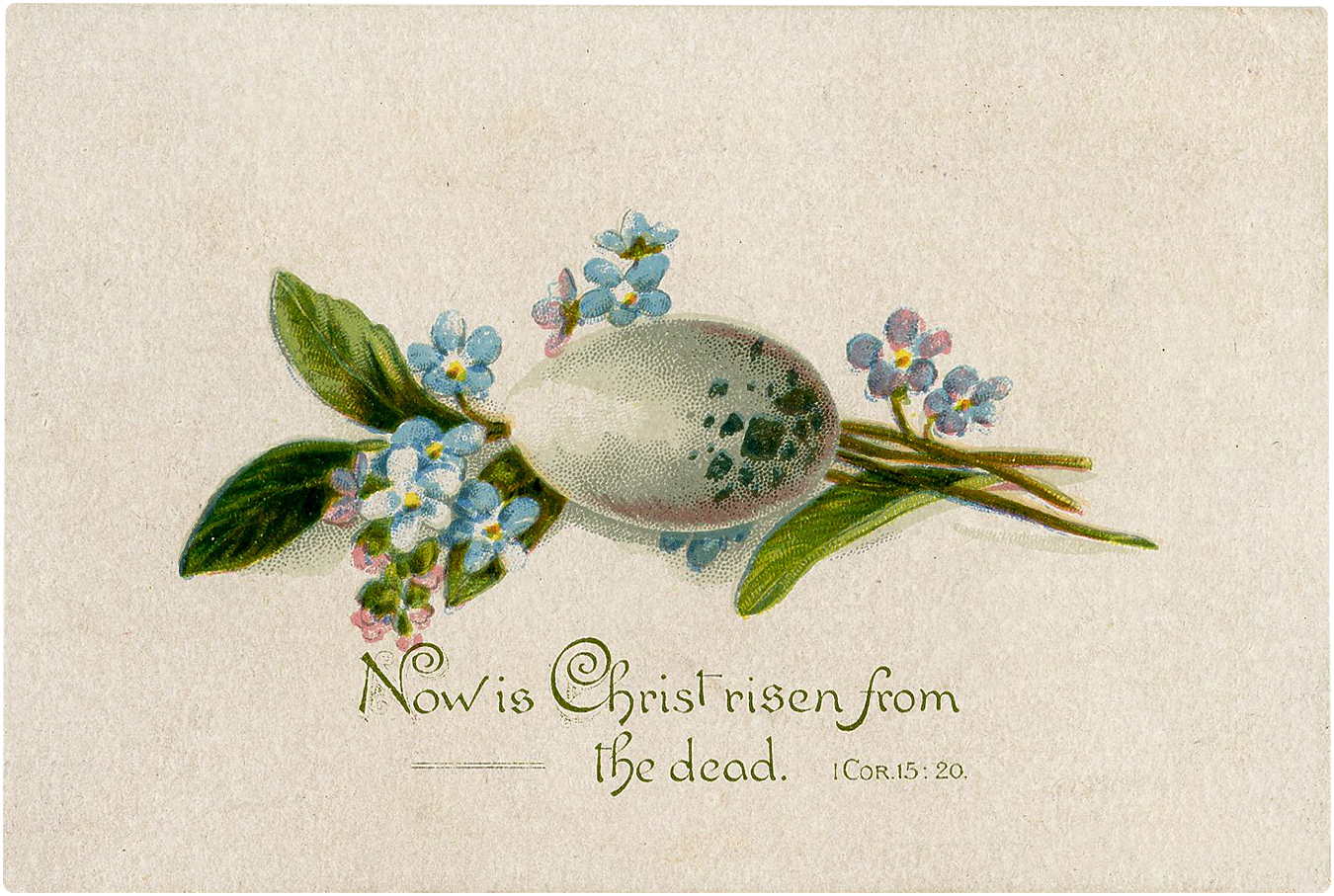 Vintage Lovely Speckled Bird Egg Bible Quote Image!