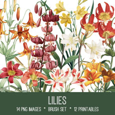 Lilies Images Kit! Graphics Fairy Premium Membership