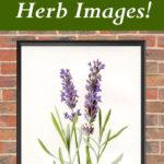 10 Best Vintage Herb Images