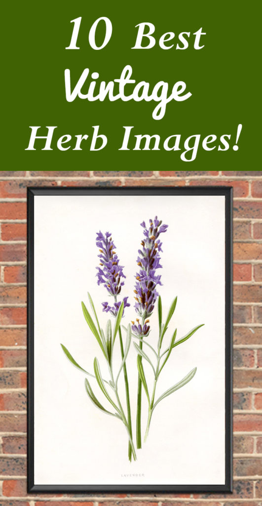 10 Best Vintage Herb Images