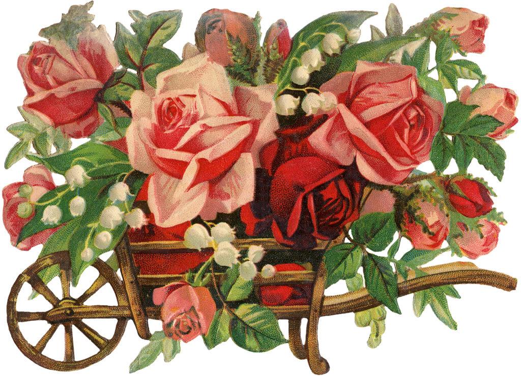 Vintage Peach Roses in Wooden Wheelbarrow Image!
