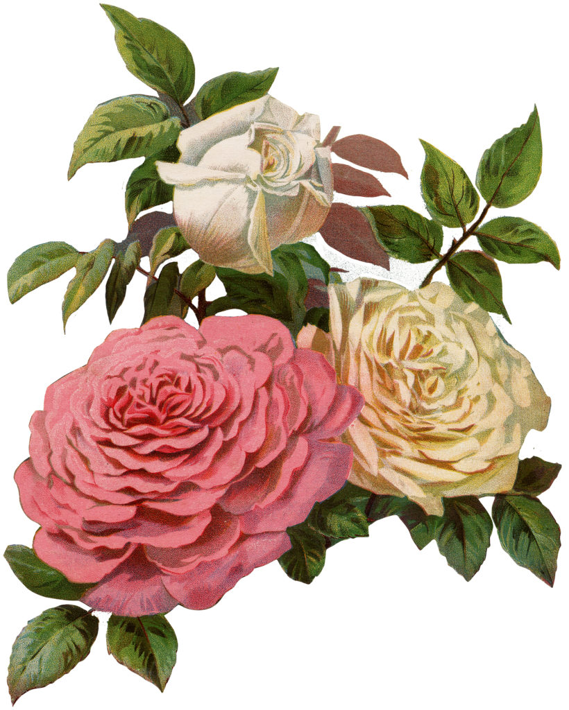 Lovely Victorian Cream and Pink Roses Print!