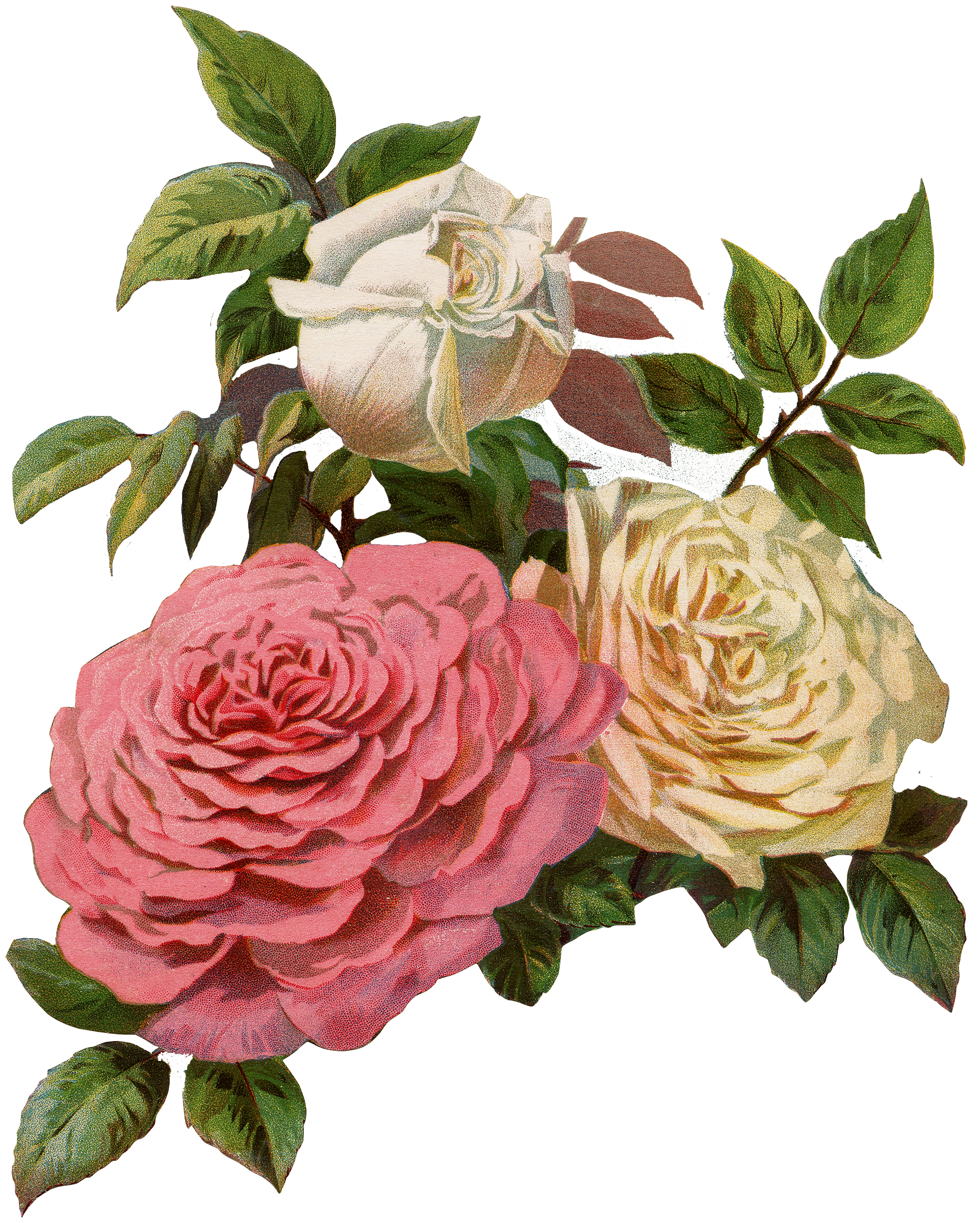 Lovely Victorian Cream and Pink Roses Print! - The Graphics Fairy