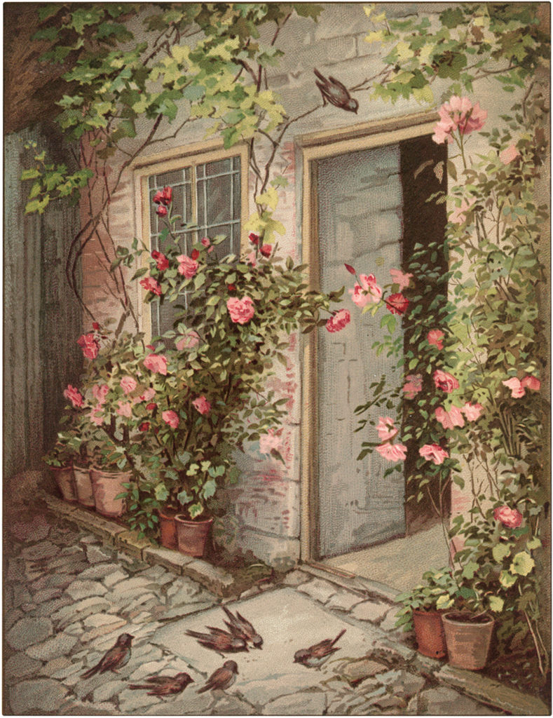 Nostalgic Cottage with Climbing Pink Roses and Birds Image!