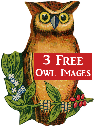 3 Free Cute Owl Images