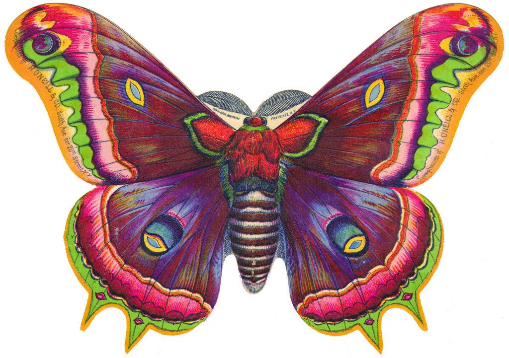 Large Butterfly Moth Die Cut