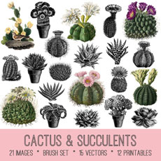 Cactus & Succulents Image Kit! Graphics Fairy Premium Membership