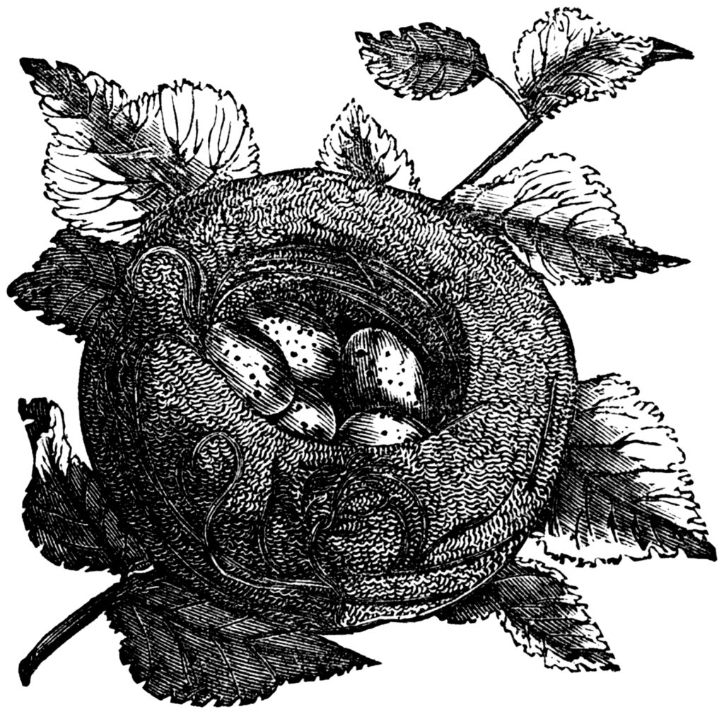 Vintage Woodcut Nest with Speckled Eggs Graphic!