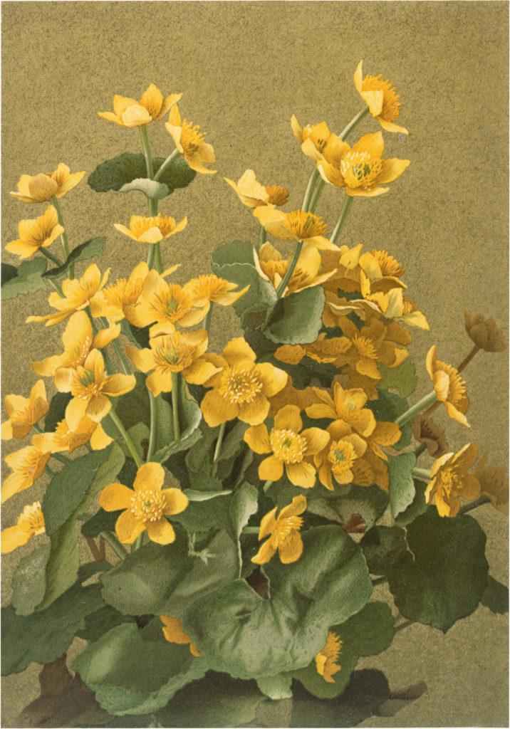 Stunning Vintage Golden Five Petaled Flower Image!
