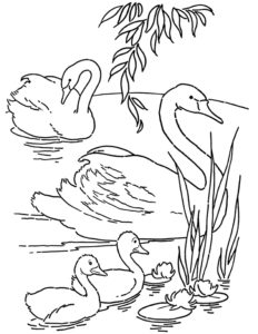 Free Printable Swans Coloring Page