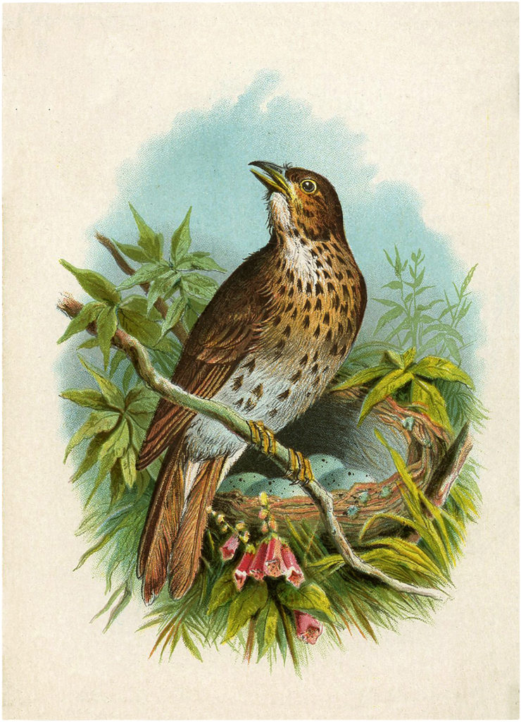 Beautiful Vintage Brown Spotted Bird with Eggs Image!