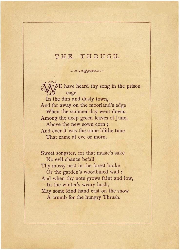 Thrush Poem
