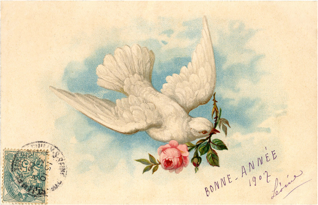 Peaceful Nostalgic Dove with Pink Rose French Postcard Image!