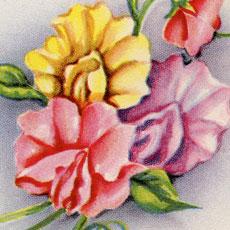 Colorful Vintage Floral Card Image!