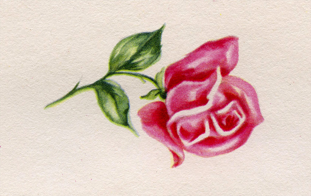 Cute Vintage Single Pink Rose Card Image!