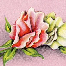 Lovely Retro Pink Floral Card Image!