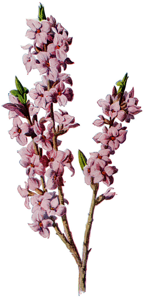 Vintage Tall Stem of Dainty Pink Flowers Image!