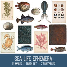 Sea Life Ephemera Images Kit! Graphics Fairy Premium Membership