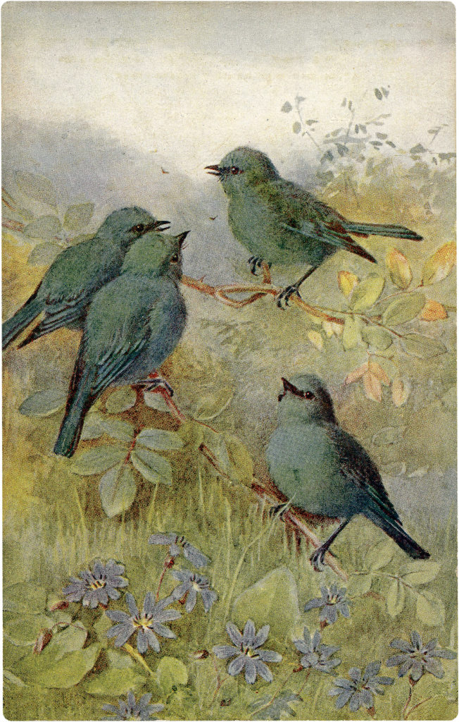 Old Postcard of Adorable Tiny Blue-Green Birds Image!
