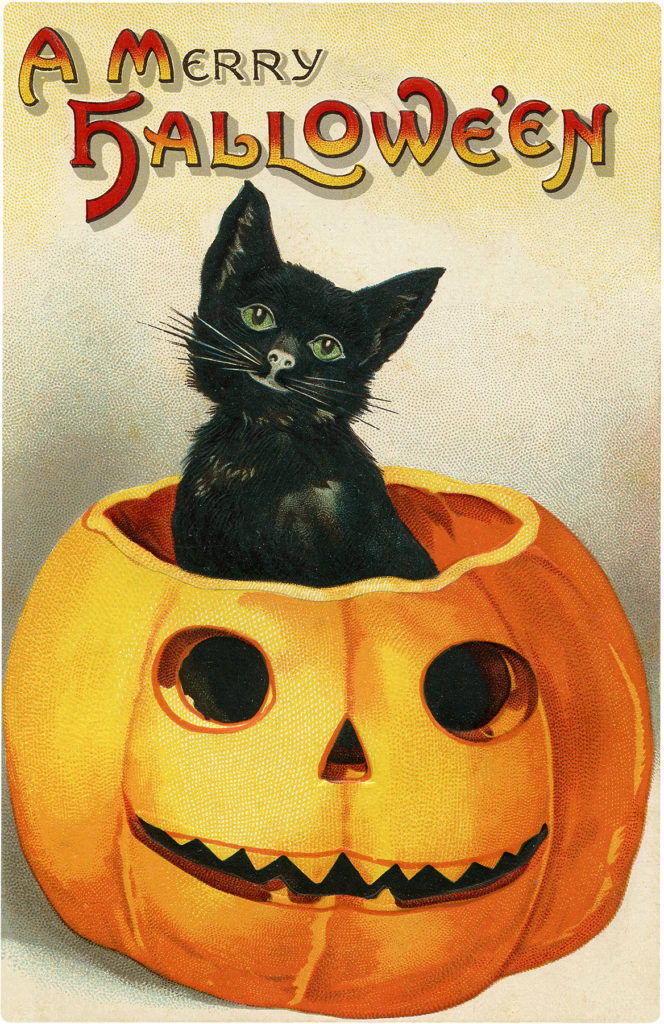 Retro Cute Black Cat in Pumpkin Halloween Graphic!