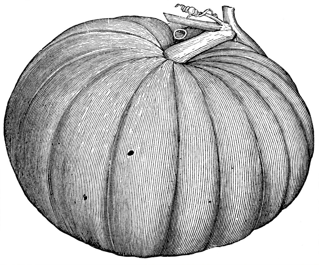 Vintage Detailed Black and White Pumpkin Image!
