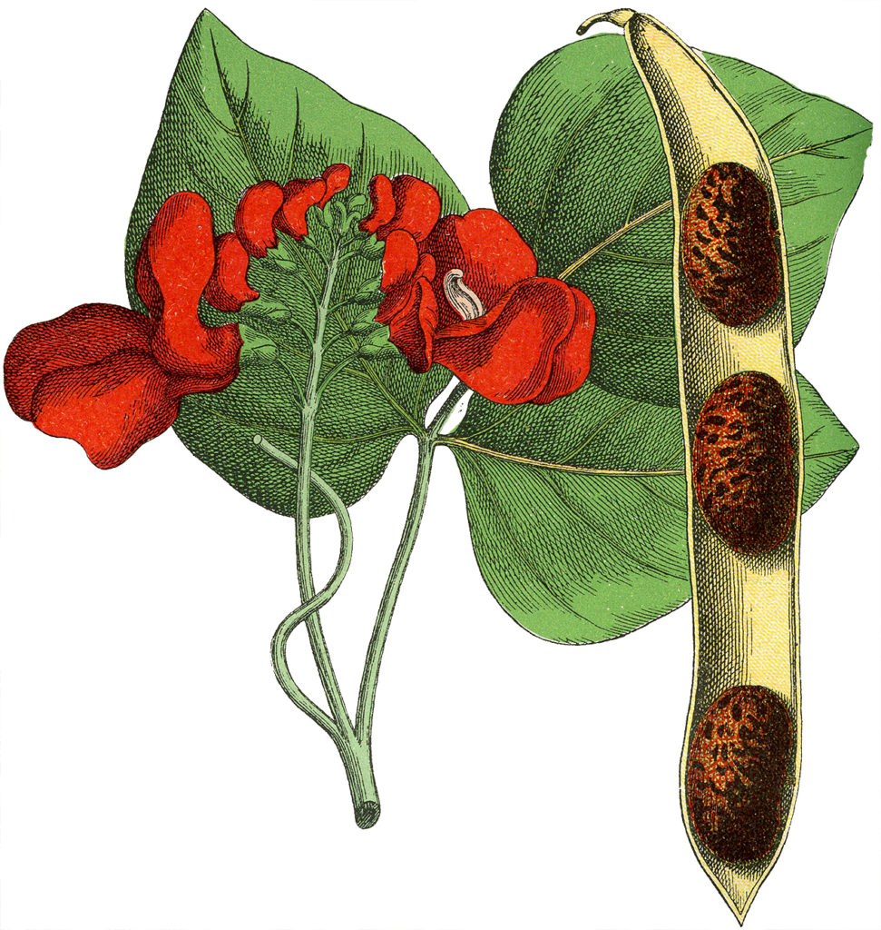 Red Floral Botanical Image