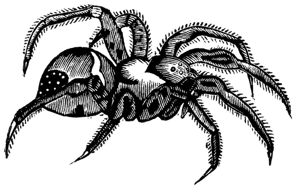 Tarantula Spider Image