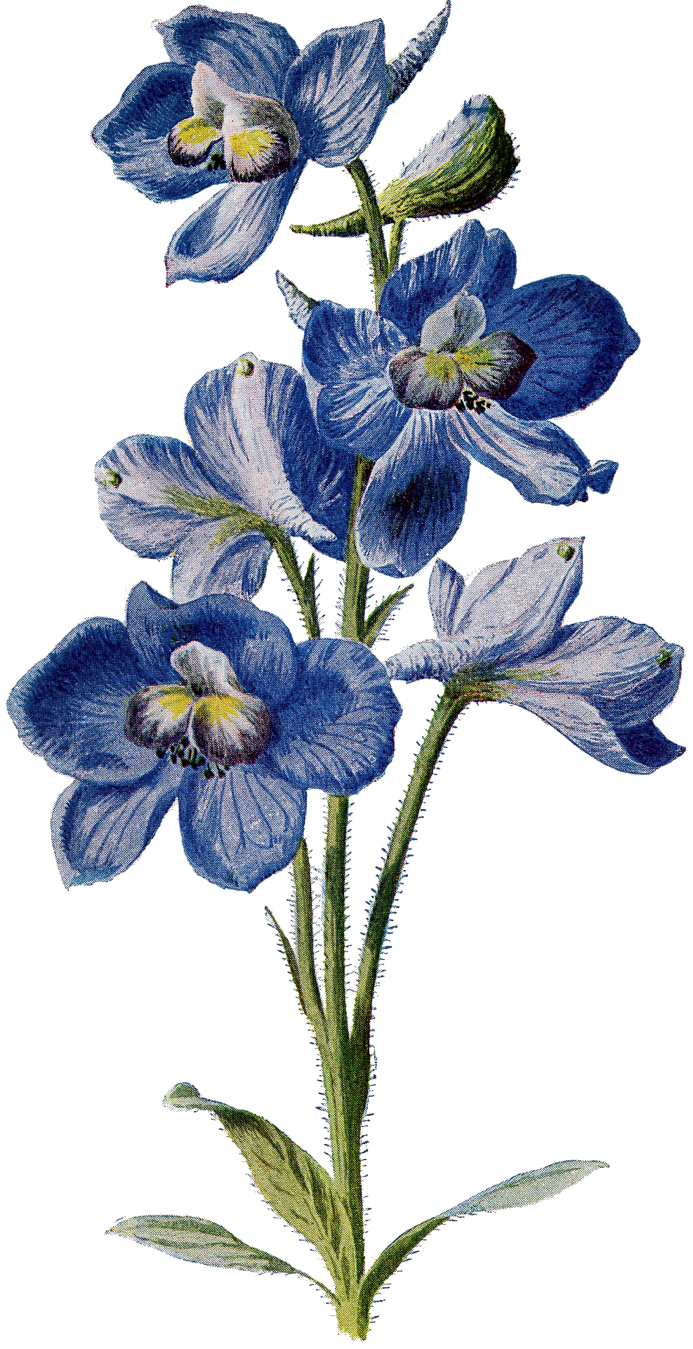 Today I'm sharing this Vintage Beautiful Tall Blue Flower Image