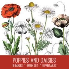 Poppies and Daisies Image Kit! Graphics Fairy Premium Membership