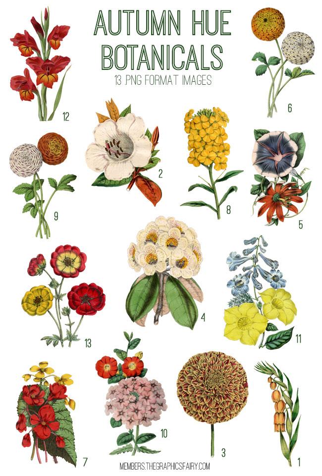 Autumn Hue Botanicals Image Kit! Graphics Fairy Premium ...