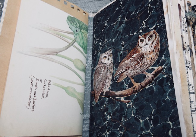 Junk Journal Owls