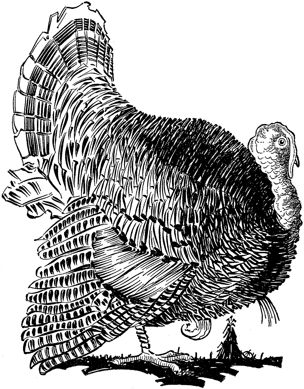 Thanksgiving Clipart Black and White Free | Thanksgiving clip art,  Thanksgiving images, Clip art